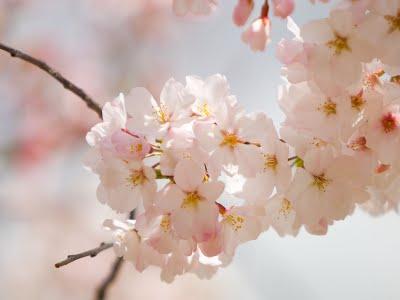 Spring, flower, fresh, start, beginning, 2012
